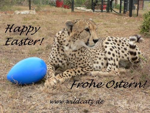 cheetah_ostern